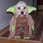 Jedi's Avatar